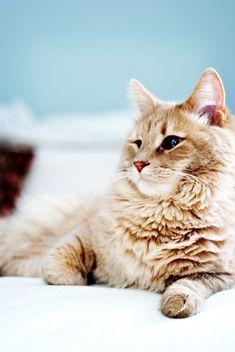 So many cute kittens videos compilation 2019 Pretty Cats, Beautiful Cats, Animals Beautiful, Cute Animals, Pretty Kitty, Baby Animals, Funny Animals, Animal Gato, Mundo Animal