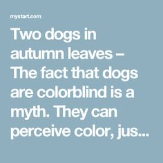 Two dogs in autumn leaves – The fact that dogs are colorblind is a myth. They can perceive color, just not as vividly as humans. These two dogs probably love the colors of autumn as much as we do.