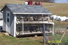 Example of amish puppy mill.