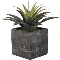 Artificial Star Succulent Desk Top Plant in Cube Pot Reviews ($36) ❤ liked on Polyvore featuring home, home decor, floral decor, filler, plants, artificial indoor plants, star home decor, succulent pots and fake indoor plants