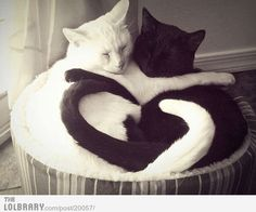 Cat Heart Yin Yang / The Lolbrary - New Funny Random Pictures Added Daily (aw,cute,cats,yin,yang,heart,together,lol,funny,photo)