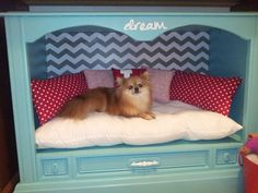 Gut & spray paint an old TV console to make this cozy dog bed.