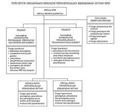 struktur organisasi brigade pengendalian kebakaran hutan