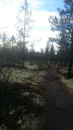 Jogging at arctic forrest. Arctic, Jogging, Country Roads, Celestial, Sunset, Outdoor, Walking, Outdoors, Running