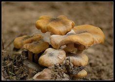 Urban mushrooms by giansacca, via Flickr