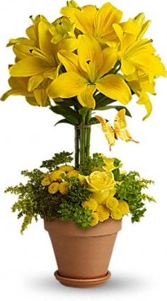tall yellow lilies in a terra-cotta pot of assorted greens, yellow roses and yellow button chrysanthemums.
