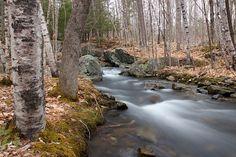Water, Creek, River, Stream, Flow