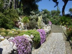 Jardin botanique Hanbury à Ventimiglia, sur la riviera Eze France, Stepping Stones, To Go, Sidewalk, Places, Outdoor Decor, Google Search, Beautiful Gardens, Botany