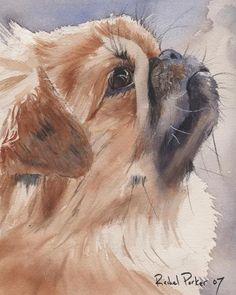 Pekingese Dog Art Print of my watercolor painting by rachelsstudio - Pekingese Thoughts