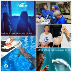 Have you visited Clearwater Marine Aquarium? Every visit supports our mission of rescue, rehab and release!