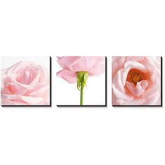 Art.Com Pink Pink Rose Triptych Canvas Art Set (380 AUD) ❤ liked on Polyvore featuring home, home decor, wall art, backgrounds, decor, fillers, art, rose wall art, 3-panel and three-panel