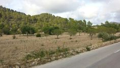 The countryside around Calvia in Mallorca.