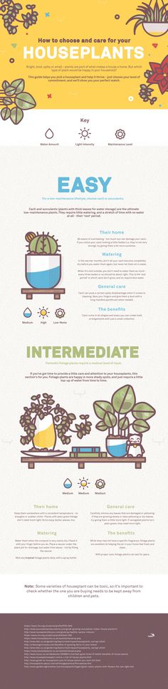 Houseplants infographic illustraiton by Lucas Jubb www.lucasjubb.co.uk in Illustration