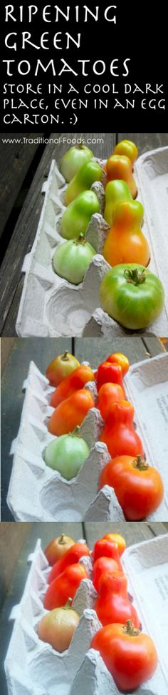 Ripening Tomatoes Tip @ Traditional-Foods.com