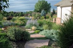 A xeriscaped garden with drought resistant plants and large, FLAT flagstones placed closely together so as to make the journey through the garden a pleasant one.
