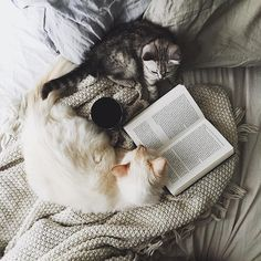Bed-time story?