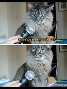 you are a cat - Google Search