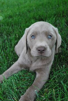 Quite possibly the cutest puppy ever!