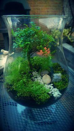 Mini world.terrarium I made. Mini world.