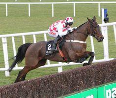 Flemenstar #Racehorse #Jump #Punchestown