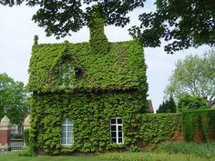 A very green cottage.