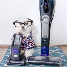 """""""When you want to party but Mom makes you do chores.  PET 2-in1 Cordless Stick Vacuum by…""""  2,578 Likes, 225 Comments - Toby LittleDude™ (Tobes) (@toby_littledude) on Instagram"""
