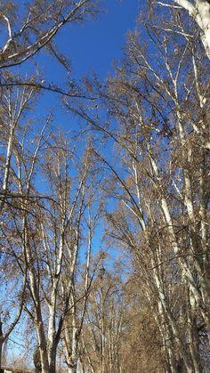 Mendoza no inverno