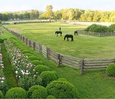 Martha Stewart's Friesians in their paddock