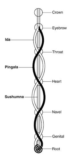 Sushumna(alternatively known as Susumna)Nadi connects the base chakra to the crown chakra.