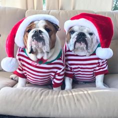 "1,354 Beğenme, 12 Yorum - Instagram'da Bulldogs (@bulldog_loversz): ""Dear Santa, you will find us on the nice list✅don't even look at that other listwe've been good…"""