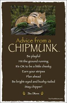 Advice from a Chipmunk Postcard