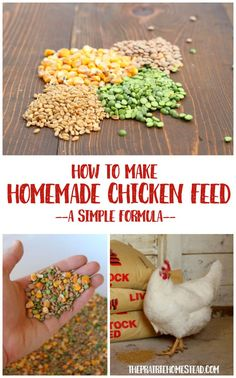 This homemade chicken feed recipe formula is one of the simplest options Ive seen. I especially love that I can make whatever quantity I need! Chicken Garden, Backyard Chicken Coops, Chicken Coop Plans, Building A Chicken Coop, Diy Chicken Coop, Chicken Tractors, Homemade Chicken Waterer, Raising Backyard Chickens, Keeping Chickens