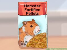 How to Care for a Hamster. There are several kinds of hamsters and most live for about years. Hamsters are nocturnal creatures, which means that they like to sleep all day. However, dwarf hamsters are crepuscular, meaning they are most. Guinea Pig Toys, Guinea Pig Care, Guinea Pigs, Chinese Hamster, Syrian Hamster, Humane Society, Bearded Dragon Vivarium, Hamster Names, Hamster Habitat