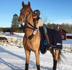 Cute Horses, Pretty Horses, Horse Love, Horse Girl, Beautiful Horses, Animals Beautiful, Animal Tumblr, Cute Little Animals, Show Jumping