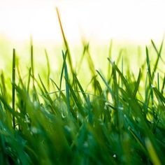 learn proper trimming for your grass or lawn