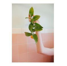 Sélection Instagram #80 // © AylaRose La'Akea // Retrouvez la sélection complète sur le site de #FisheyeLeMag ! #instagram #curation #photo #photography #arm #pastels #lightpink #tangerine #fruit #bathroom #photooftheday #picoftheday #potd