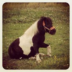Cute Pony, Stockholm.