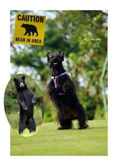 I always called my Scottie My Little Bear!