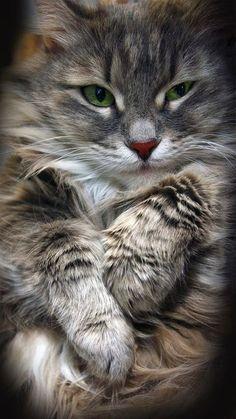 Feline friend!