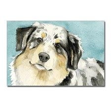 Australian Shepherd Postcards (Package of 8)