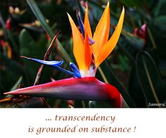 ... #transcendency is grounded on #substance !