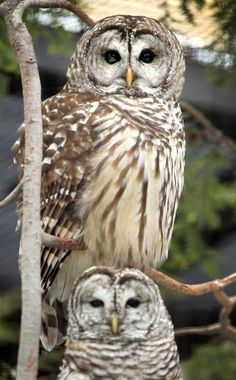 Native wildlife at home at Cleveland museum; Garfield Heights man ...