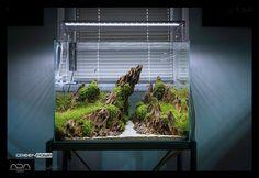 Nature Aquarium, Planted Aquarium, Cool Tanks, Terrarium Ideas, Terrariums, Freshwater Aquarium, Fresh Water, Green Aqua, Fish Tanks