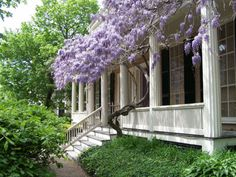 move lilac and willow to back yard and work on white or pink wisteria at South East corner of porch! Porch Garden, Garden Landscaping, Fresco, Porches, Little Gardens, Best Places To Live, Water Features, Garden Inspiration, Curb Appeal