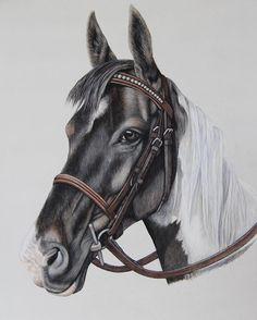 'Charlie' Finished commission #horseart10 #horse #horses #horseart #hchandmade #petportrait #petsofinstagram #pastelpainting #bestdrawing #art #artist #artoftheday #artsy #artistsoninstagram #equine ##equineart