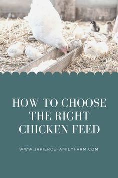 Raising a healthy flock starts with the right feed. Here are the best chicken feeds you can buy. Chicken Facts, Chicken Feed, Farm Projects, Facts For Kids, Baby Chicks, Grow Your Own Food, Raising Chickens, Chickens Backyard, Livestock