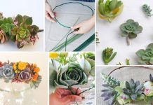 DIY Succulent Crown In 10 Easy Steps
