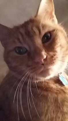 My ginger boy Sid