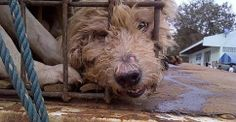 Please sign and SHARE this important petition  to stop the dog smuggling trade: http://www.change.org/petitions/stop-the-dog-meat-smuggling-trade