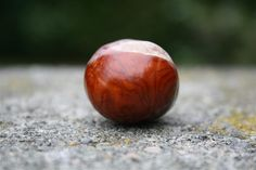 Photograph macro shot of a conker #photography #photograph #picture #macro #conker